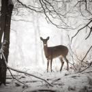 Finnish Photographer Shares Secret to Magnificent, Wintry ...