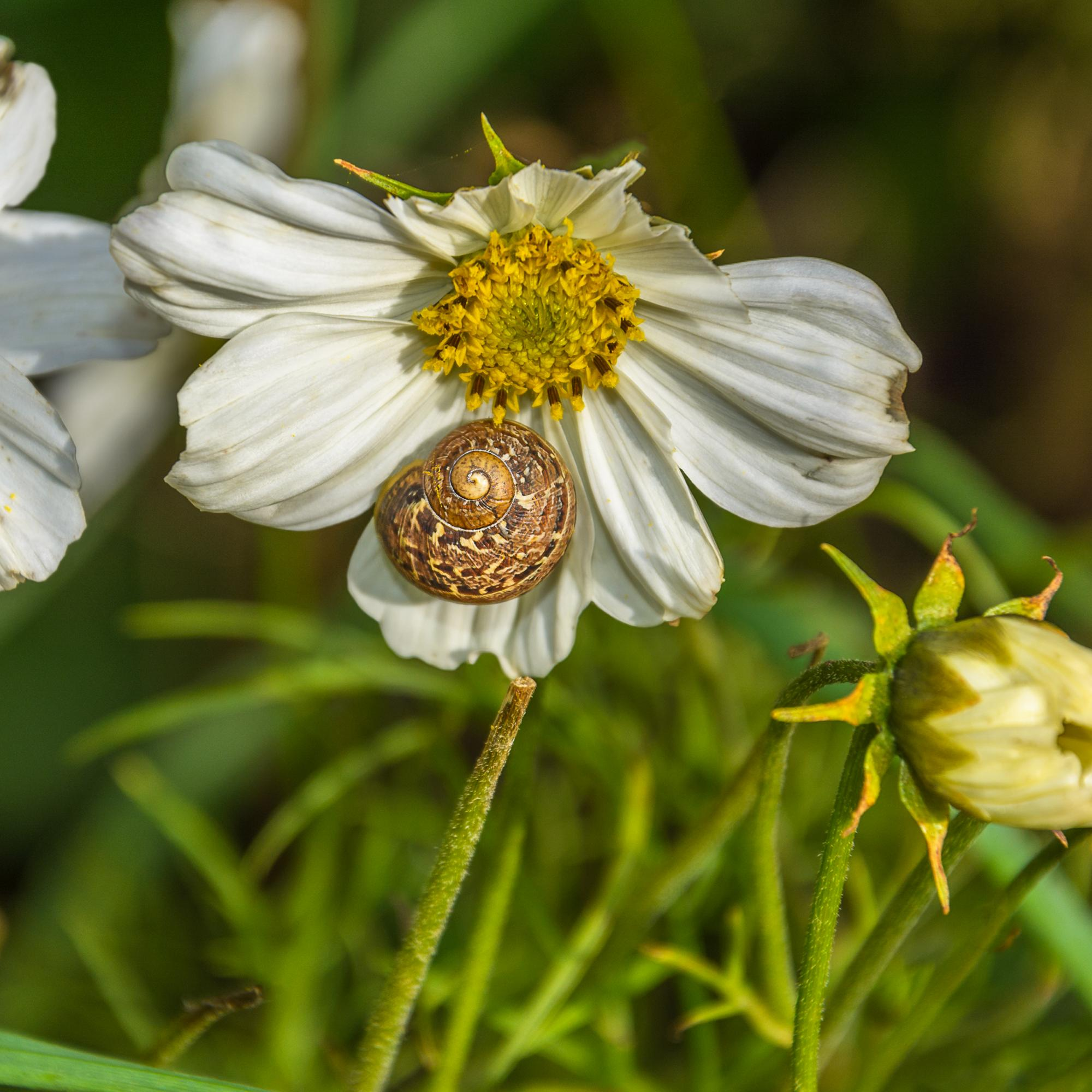 Snail on flower