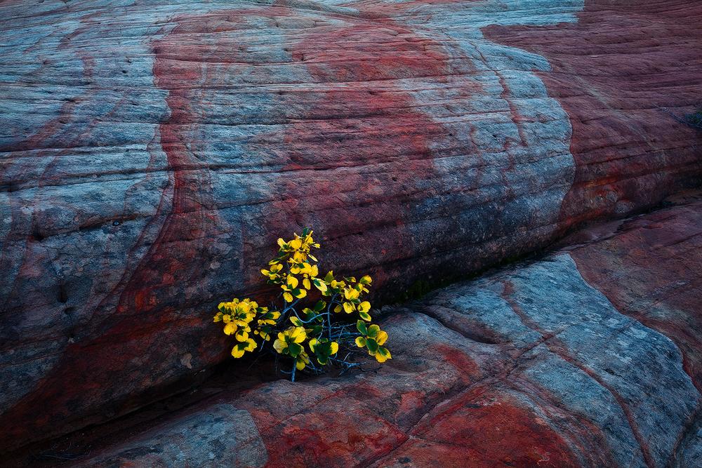 Peppermint Rock