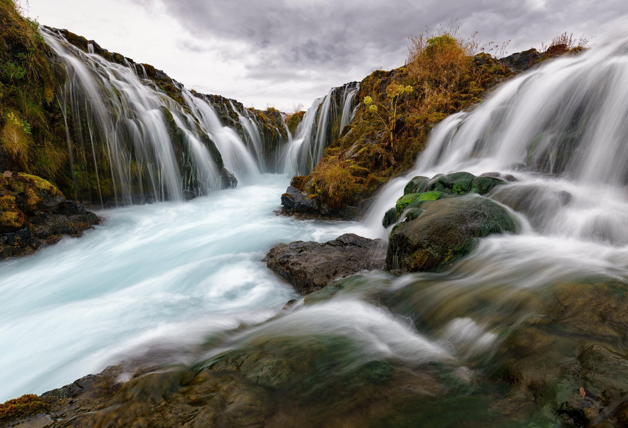 the wild flow