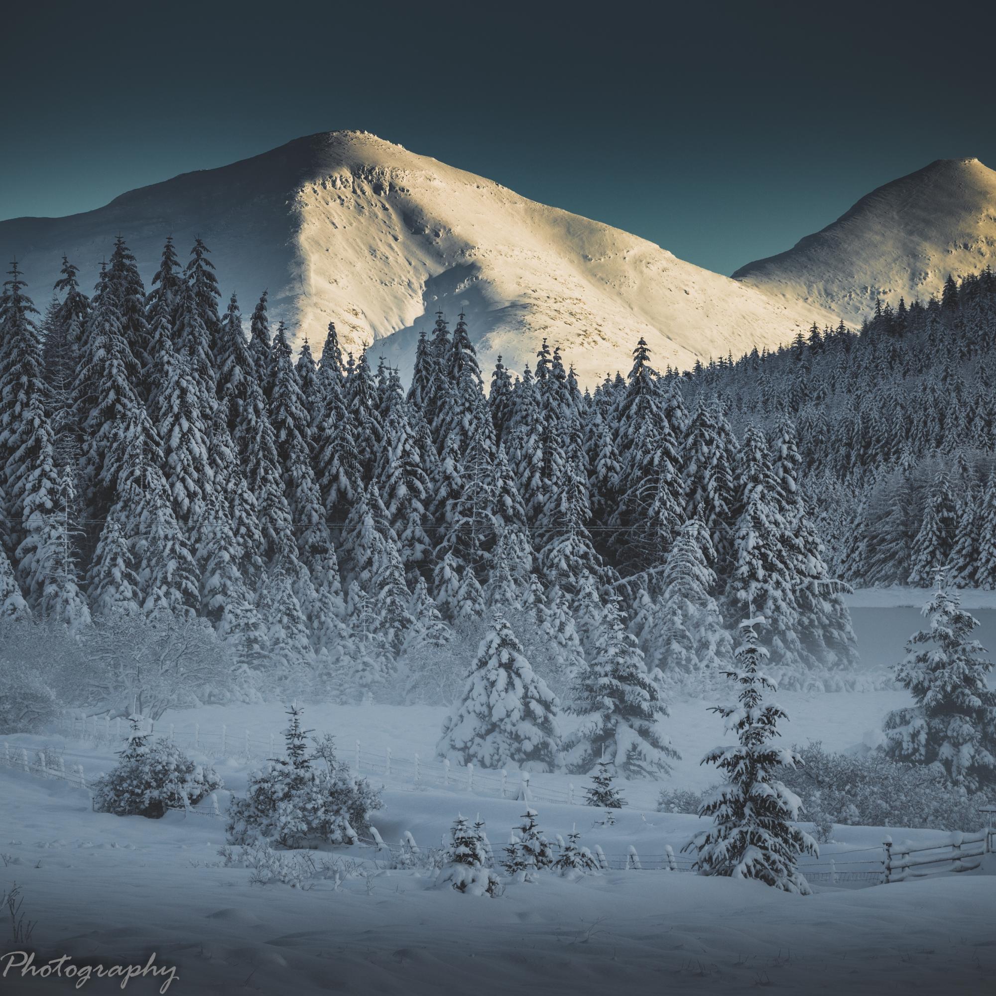 Winter Wonderland at daybreak
