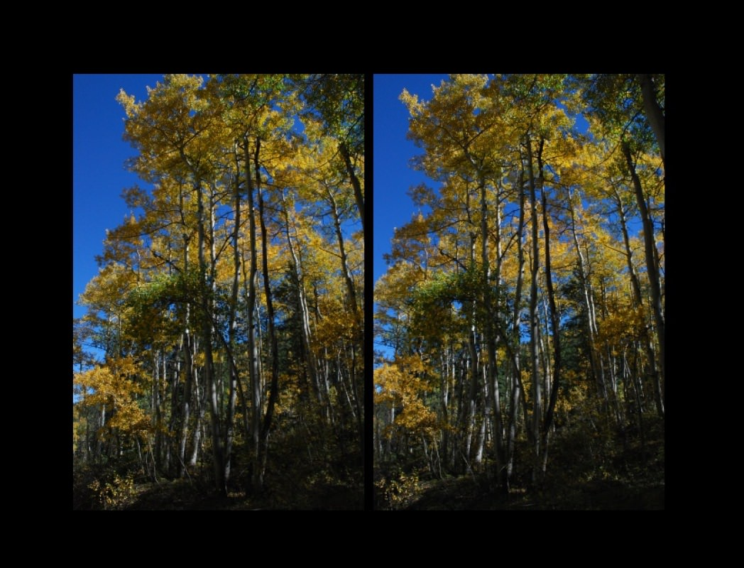 """TallAspenStereo - this """"faux"""" 3D photo was taken in September of 2010 near Cottenwood Lake , not far from Buena Vista, Colorado.  """"Still life"""" is the only suitable subject matter for """"faux stereo"""" photos, and this grove of Aspens provided nice depth of field.  The two shots were taken only a few seconds apart, and they were matched-up and combined with LViewPro.  (Many other photo editing tools would work just as well.)"""