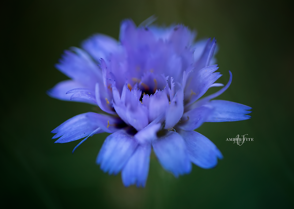 Fine Art Nature by Amber Fite Photography - Macro