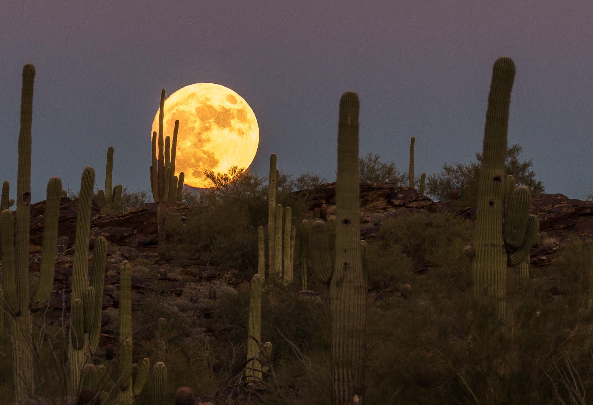 Saguaro Super Moon