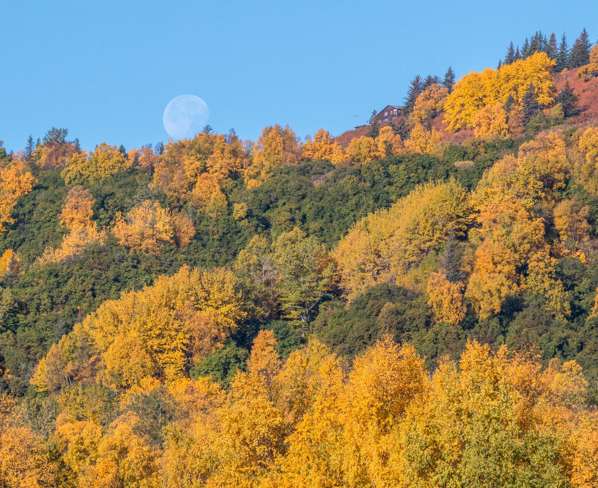 Setting Moon Amongst Fall Colors