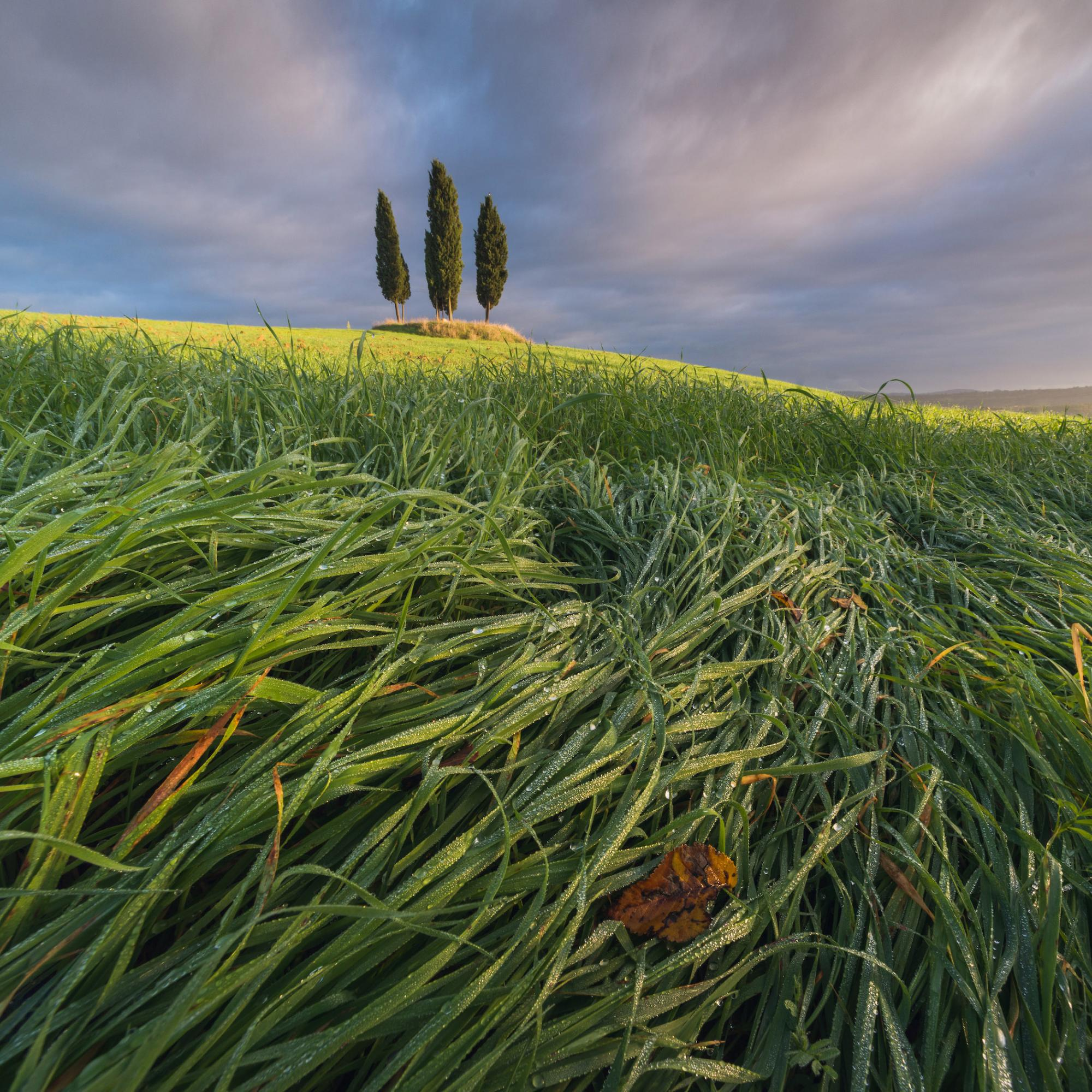 Spring Tuscany by Daniel Kordan 1