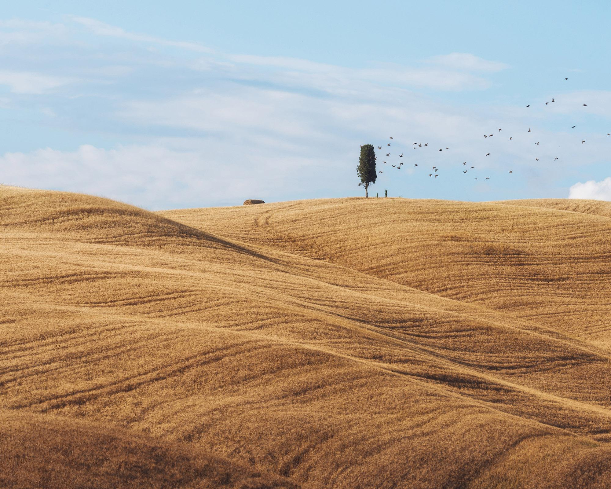 by Daniel Kordan - Summer Tuscany