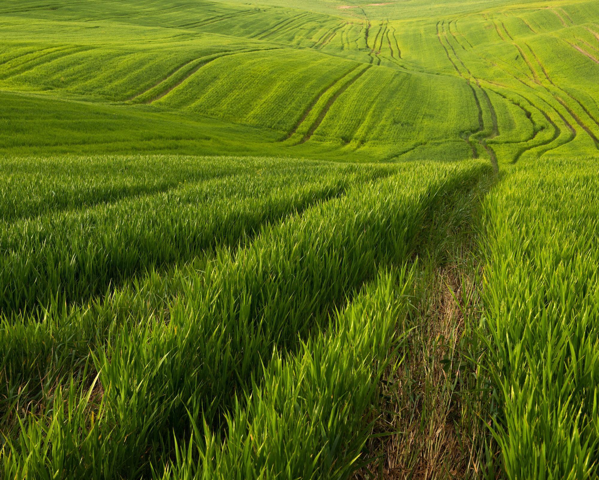 by Daniel Kordan - Spring Tuscany