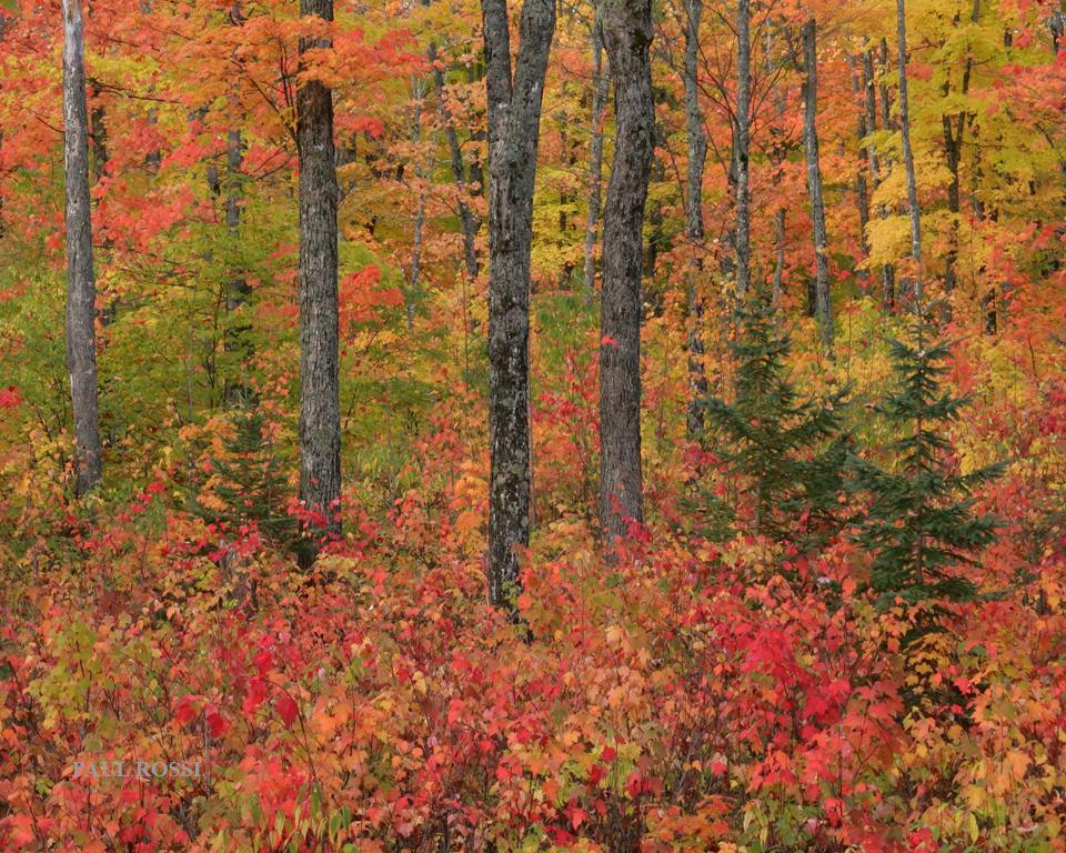 Michigan Upper Peninsula Fall Forest