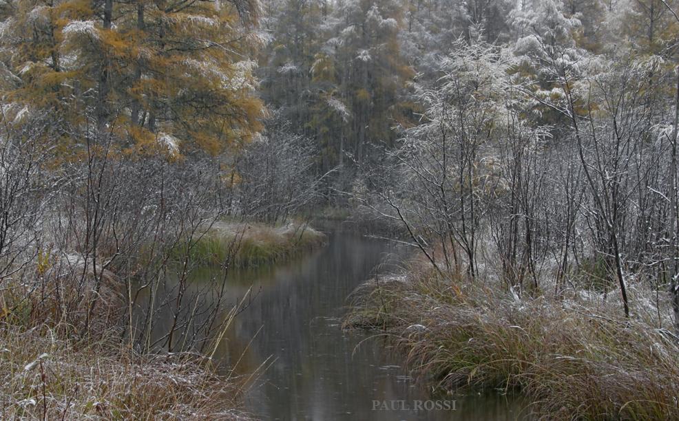 Snowy Fall Tamarack Creek