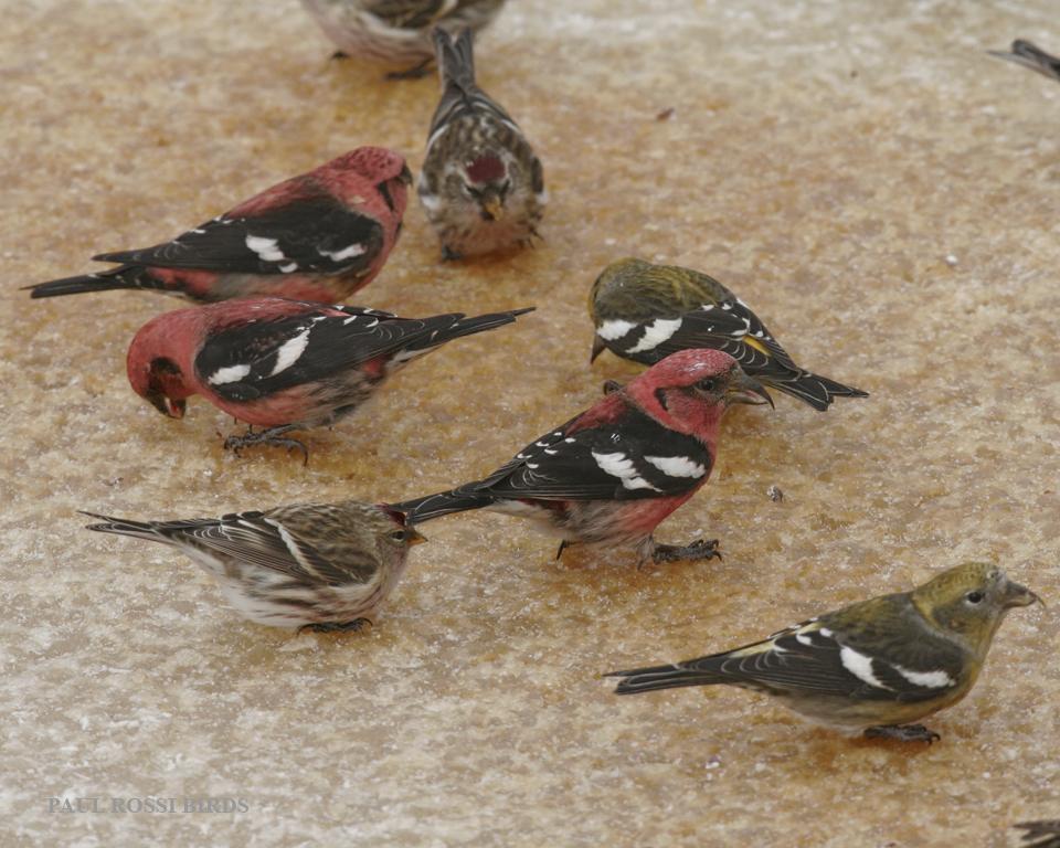 Natural Bird Feeder