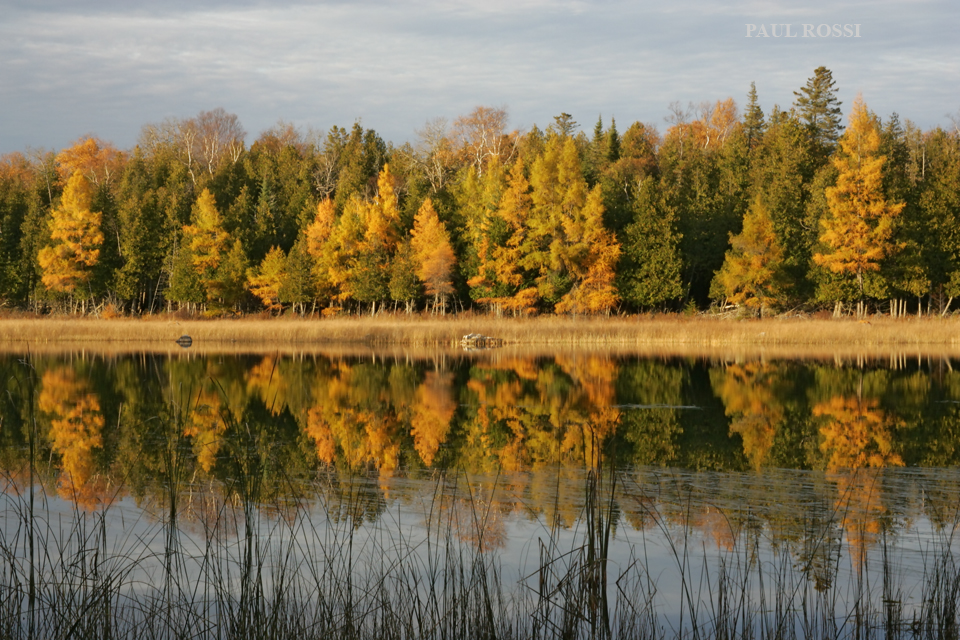 Cove Fall Tamaracks Reflection