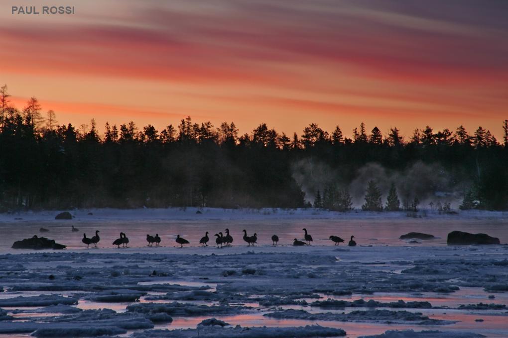 Frozen Geese Sunrise