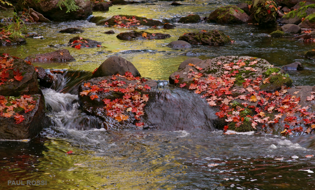 Golden Fall Creek