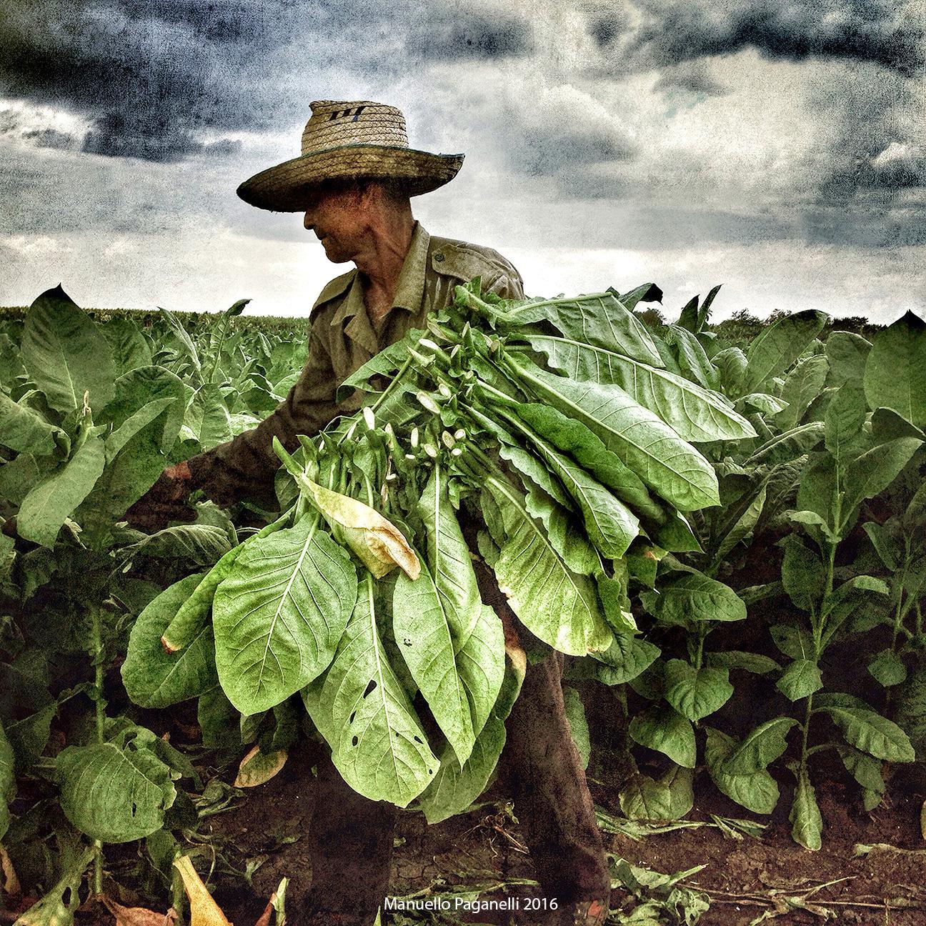 Tobacco Farmer, Cuba