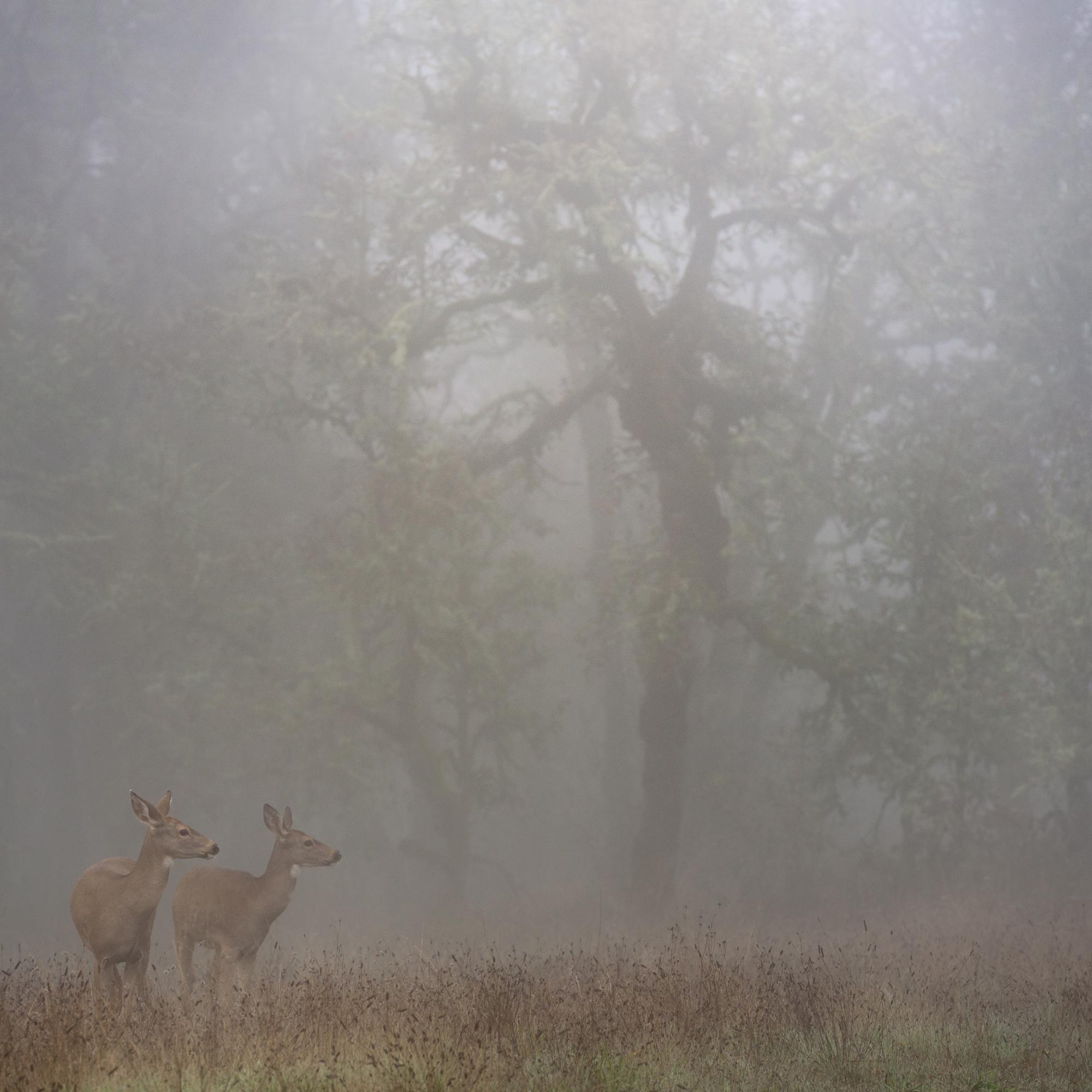 fogtober deer