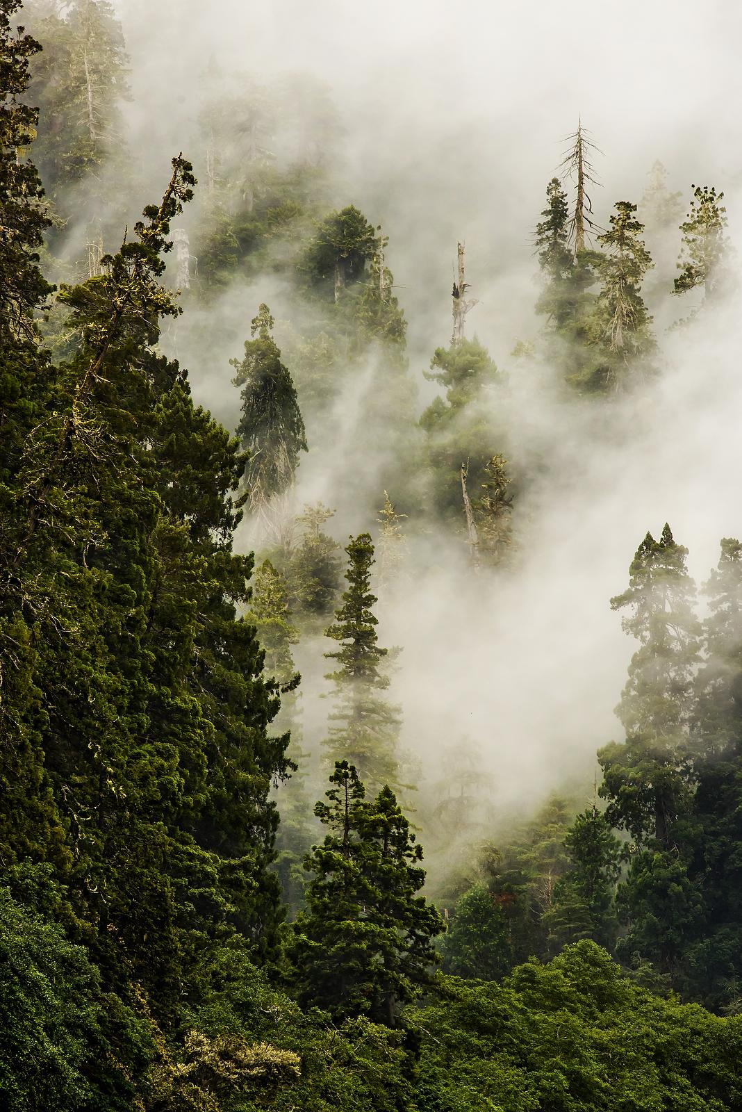 Fog Over Redwood Creek