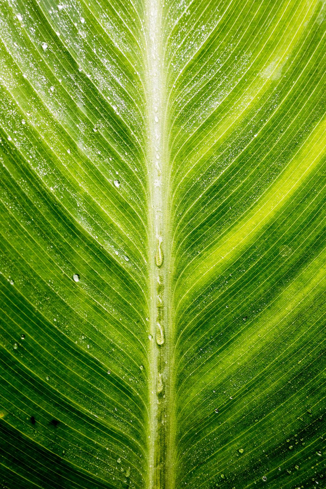 Tropical Leaf - Nature