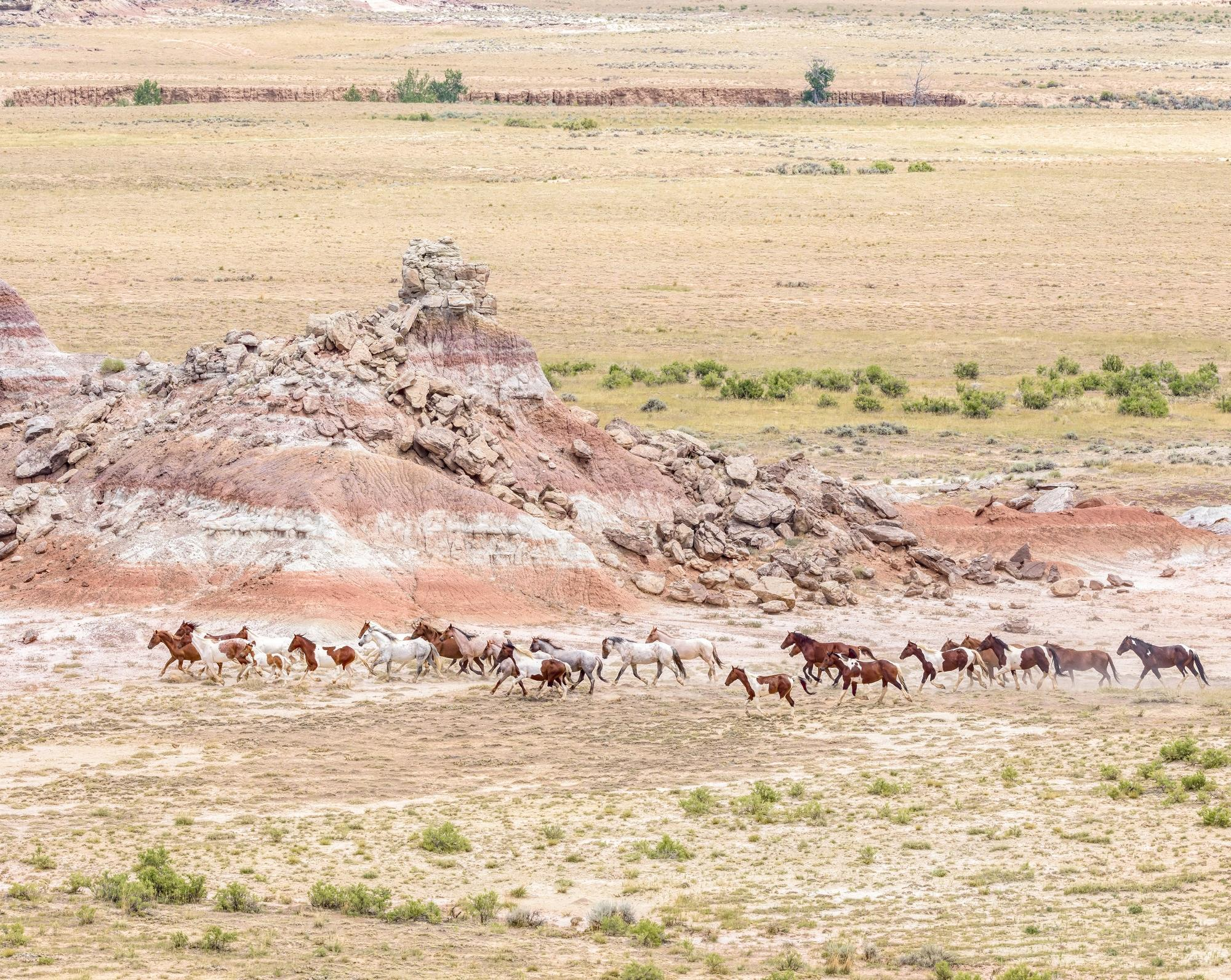 Fifteenmile Wild Mustangs