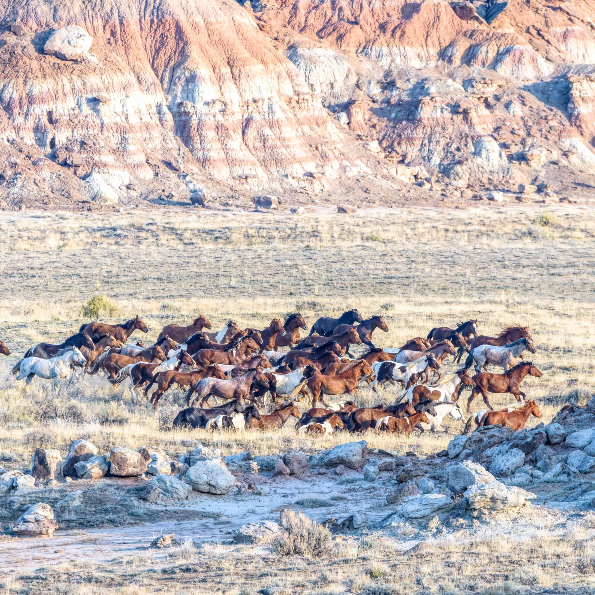 Fifteenmile HMA Wild Horses