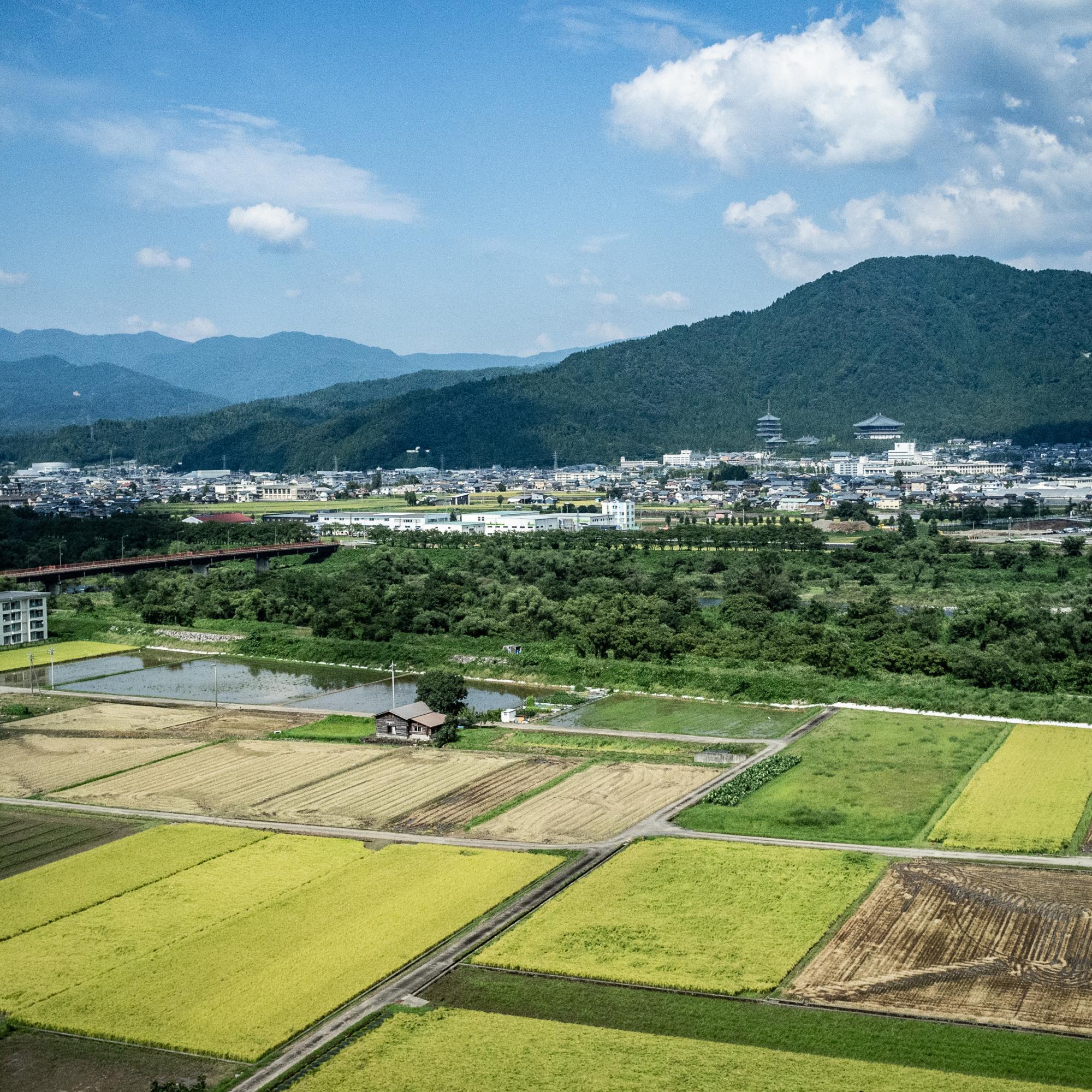 Japanese Fields