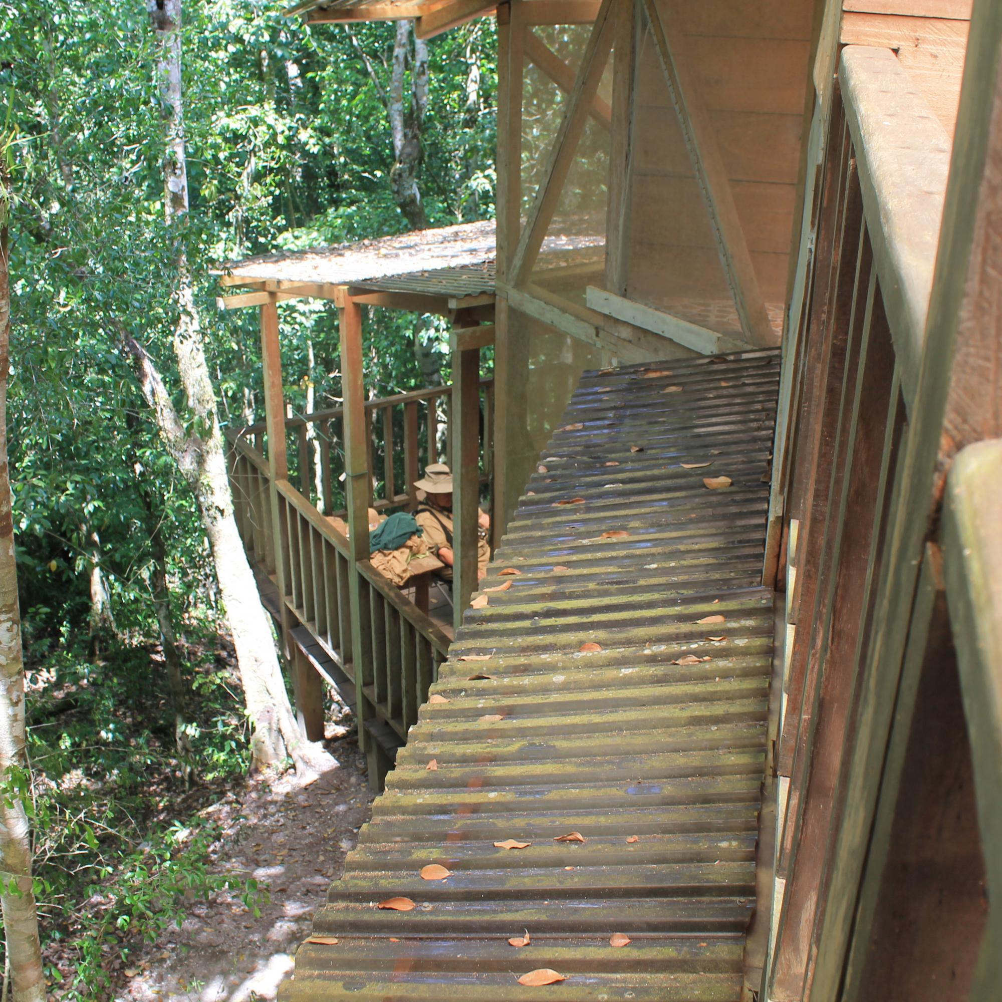 Dr. Hansen's Tree House IMG_6787