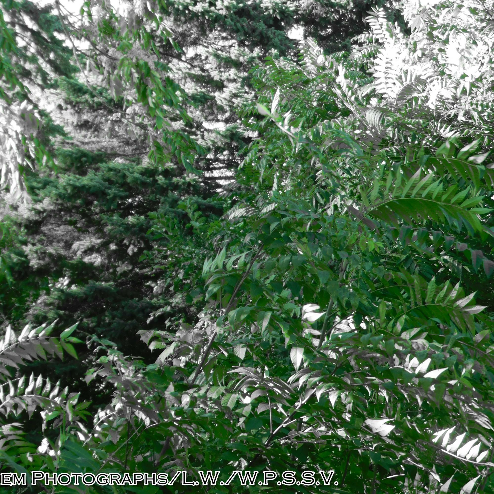 Color Splashed Green Leaves (2)