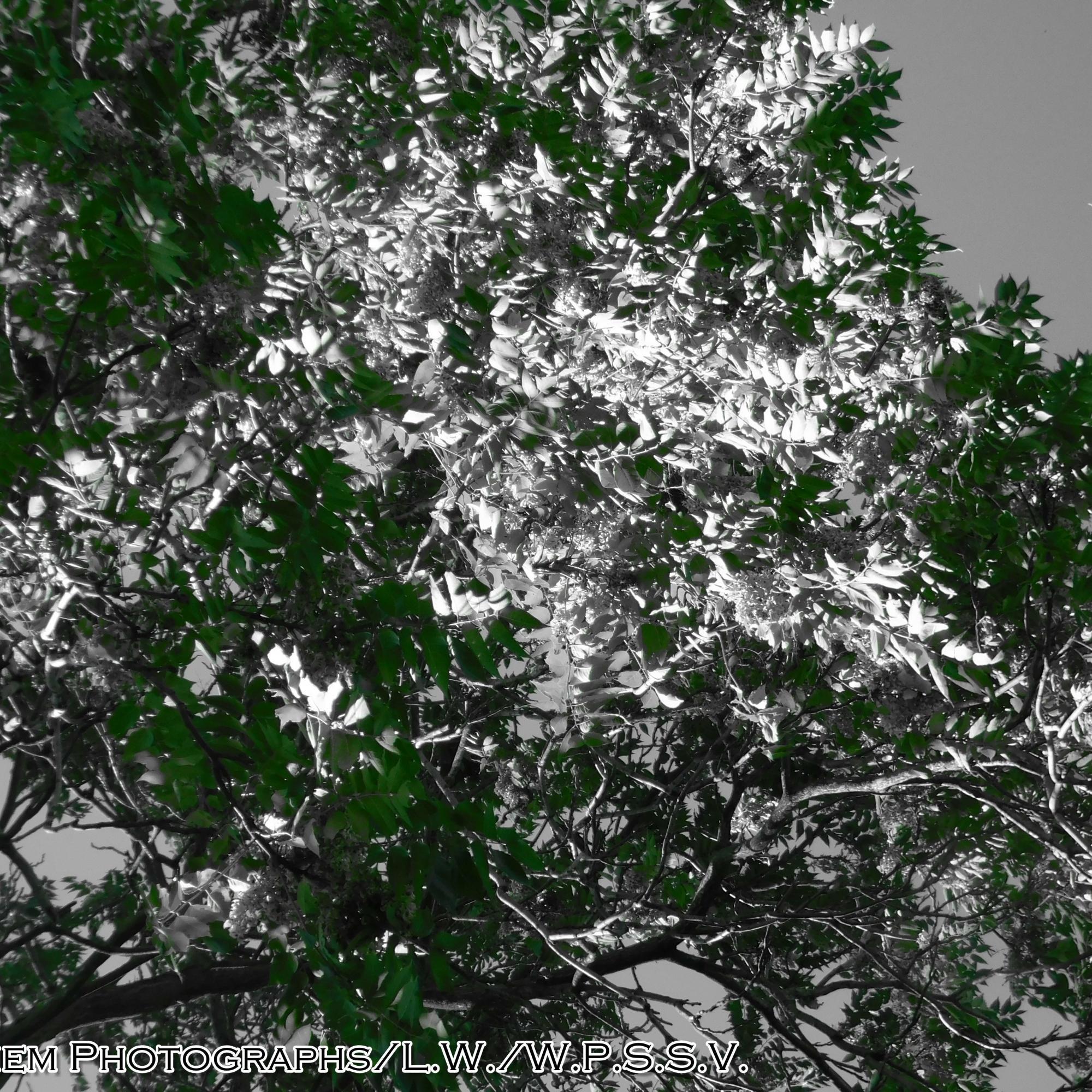 Green Color Splashed Leaves