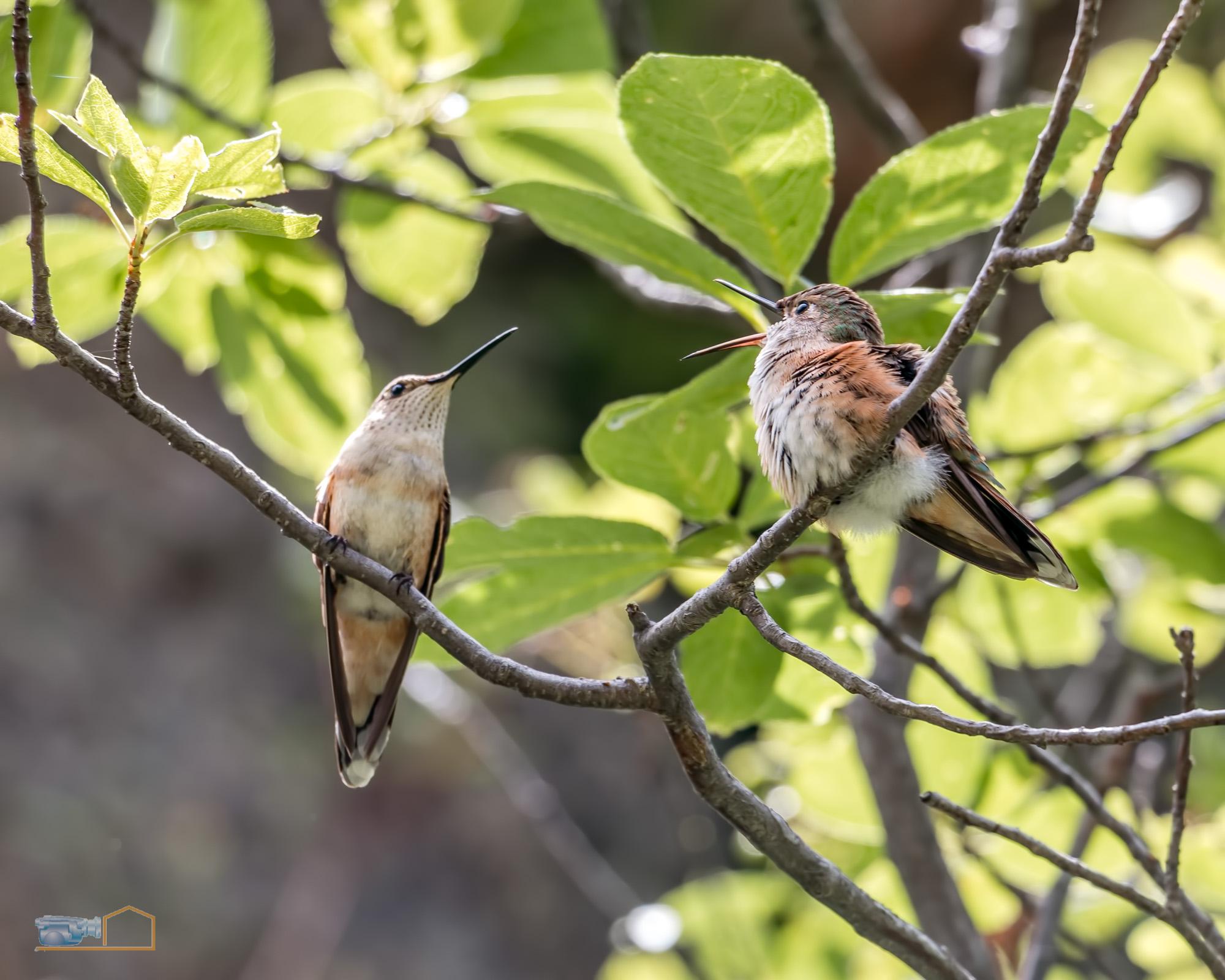 0499-RMNP_Gem_Lake_Hummingbirds_E_HiRes_Web