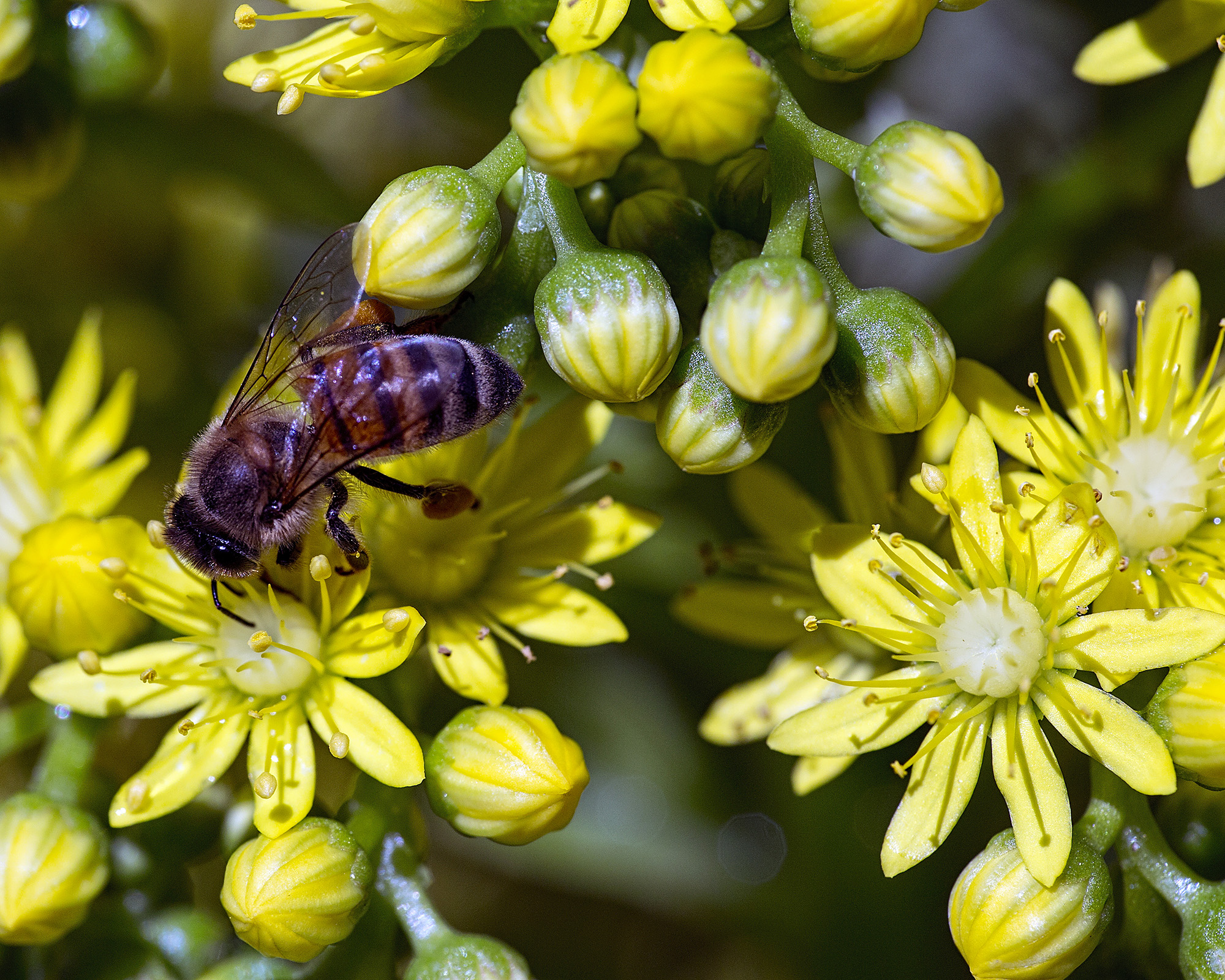 Bee and Yellow Flowers