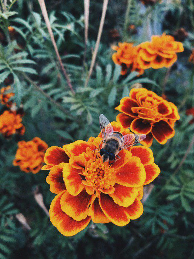Flower and bumblebee