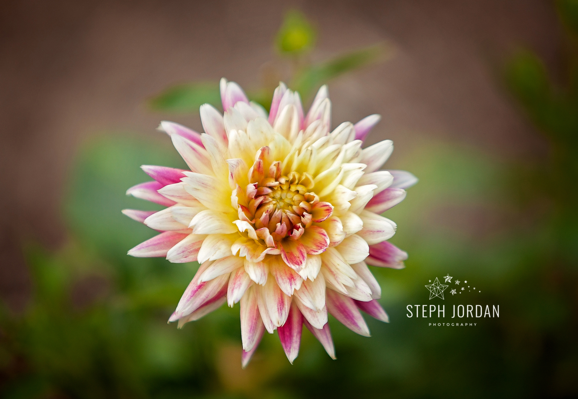 stephjordanphotography