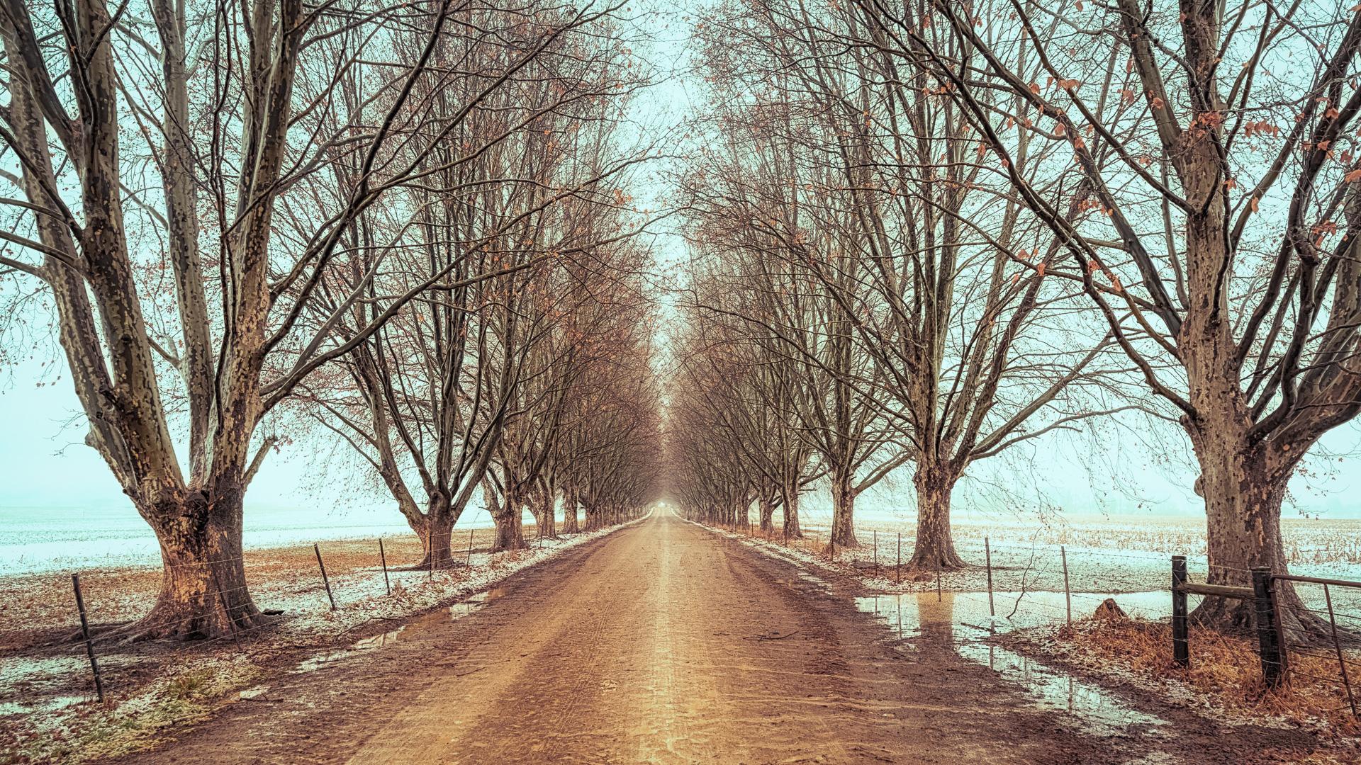 Kamberg winter avenue