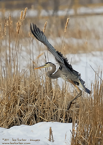 GBH Landing. He was landing in the only open water around.