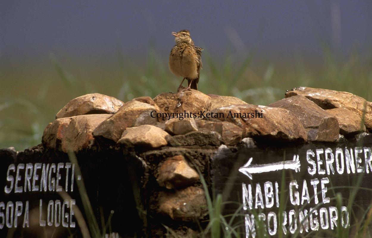 Photography by Ketan Amarshi (1)