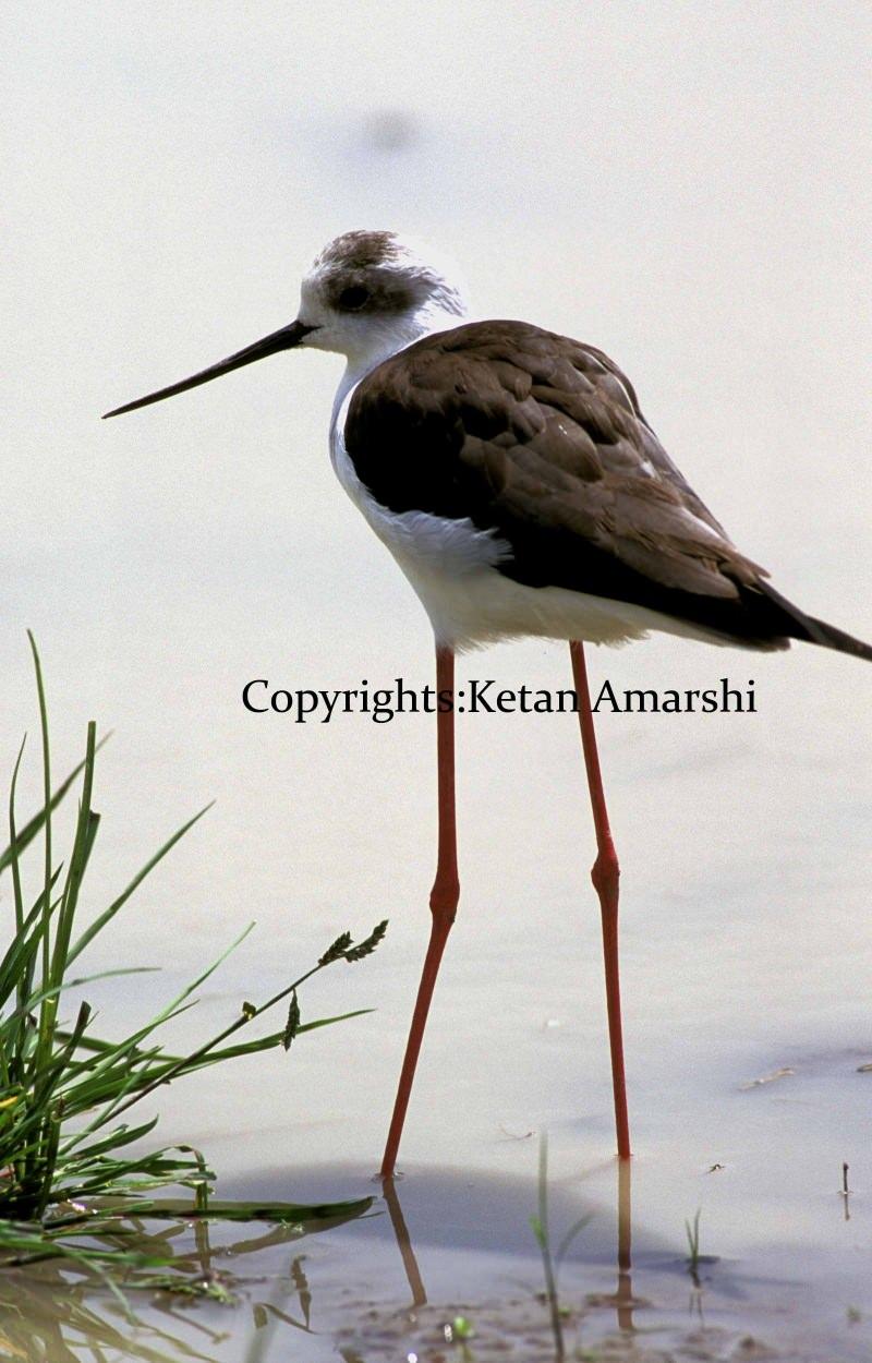 Photography by Ketan Amarshi (6) copy