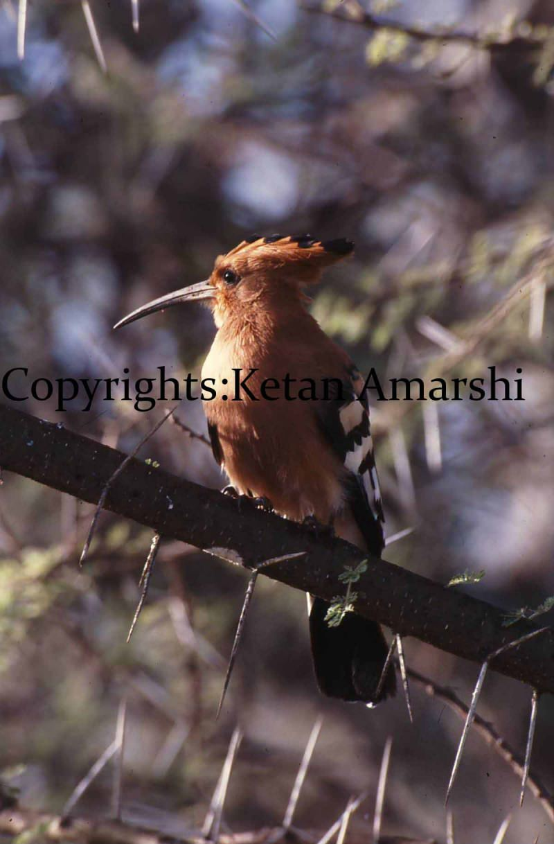 Photography by Ketan Amarshi (11)