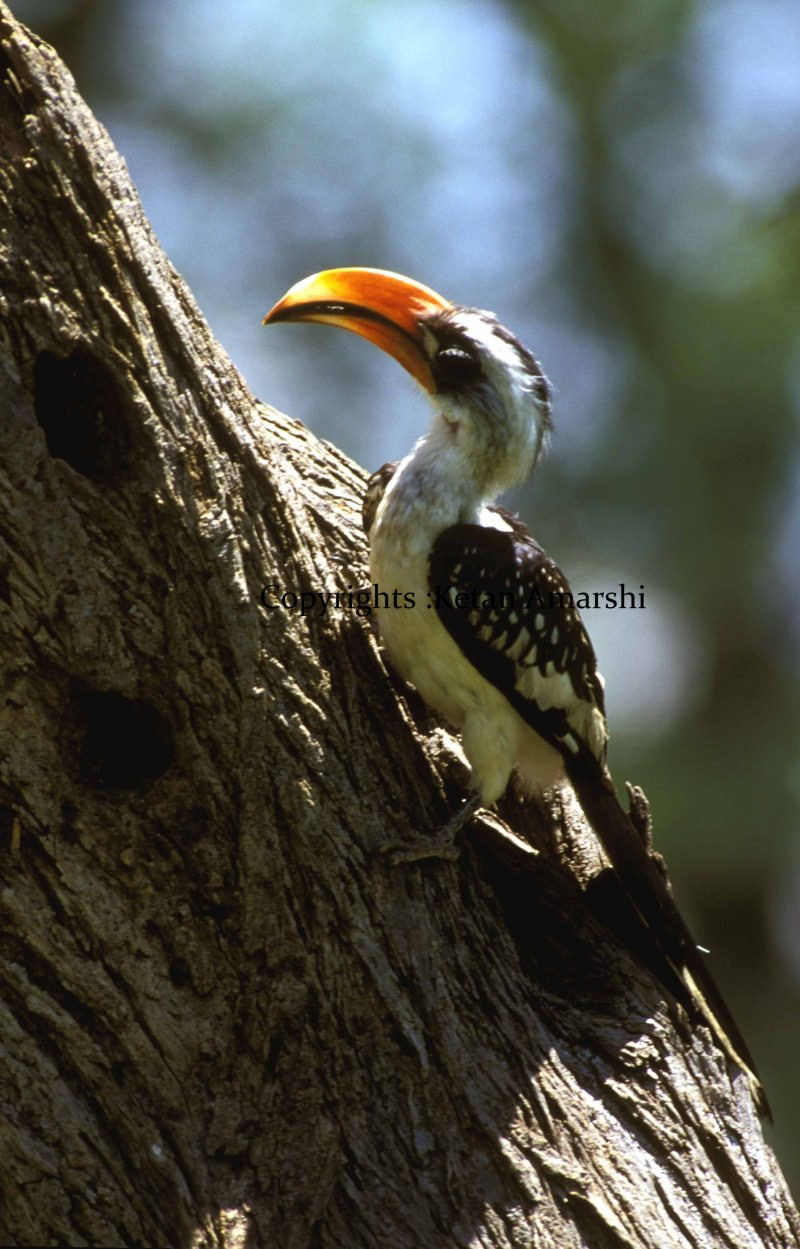 Photography by Ketan Amarshi (8)