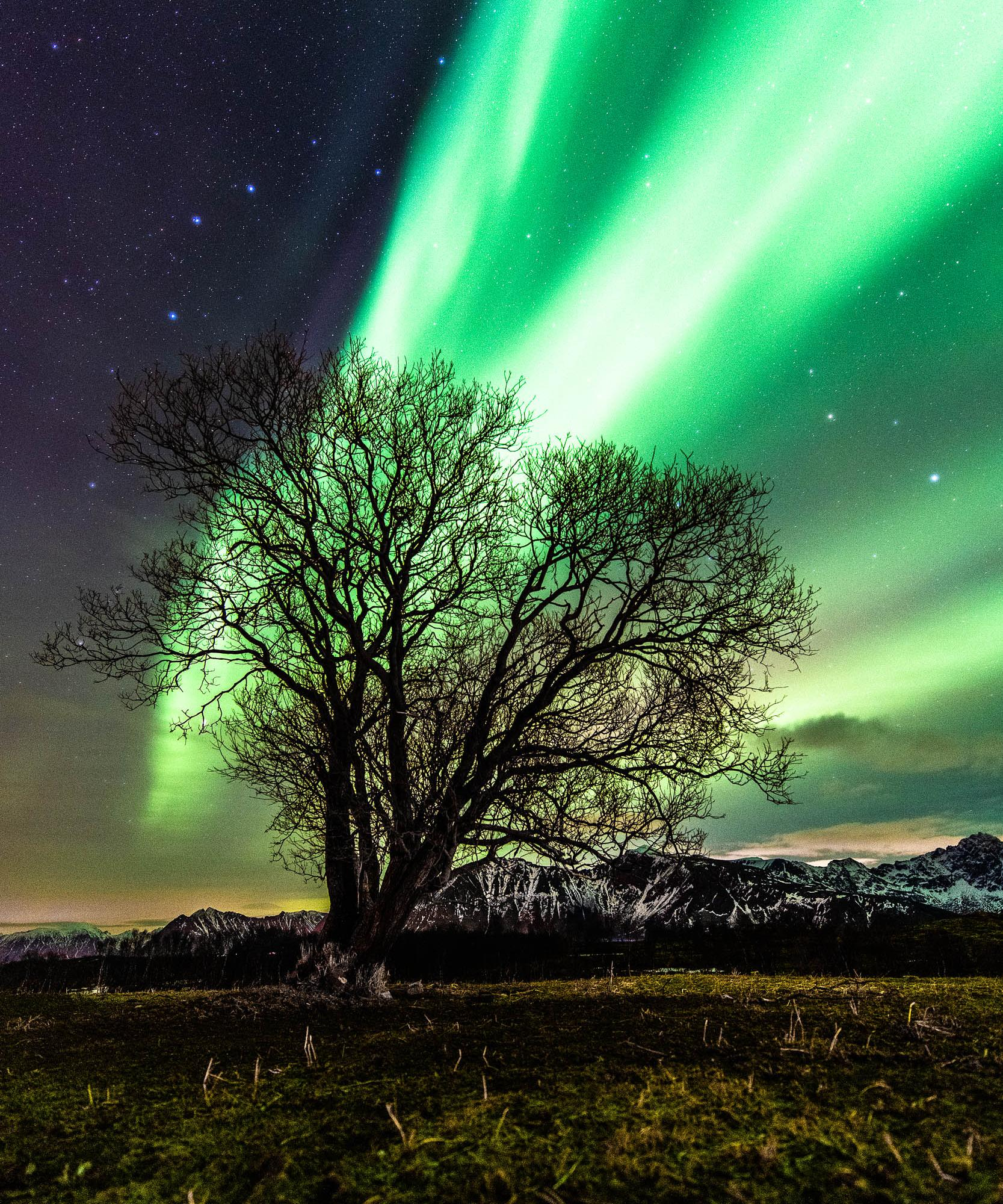Northern Lights Dancing the skies in Norway