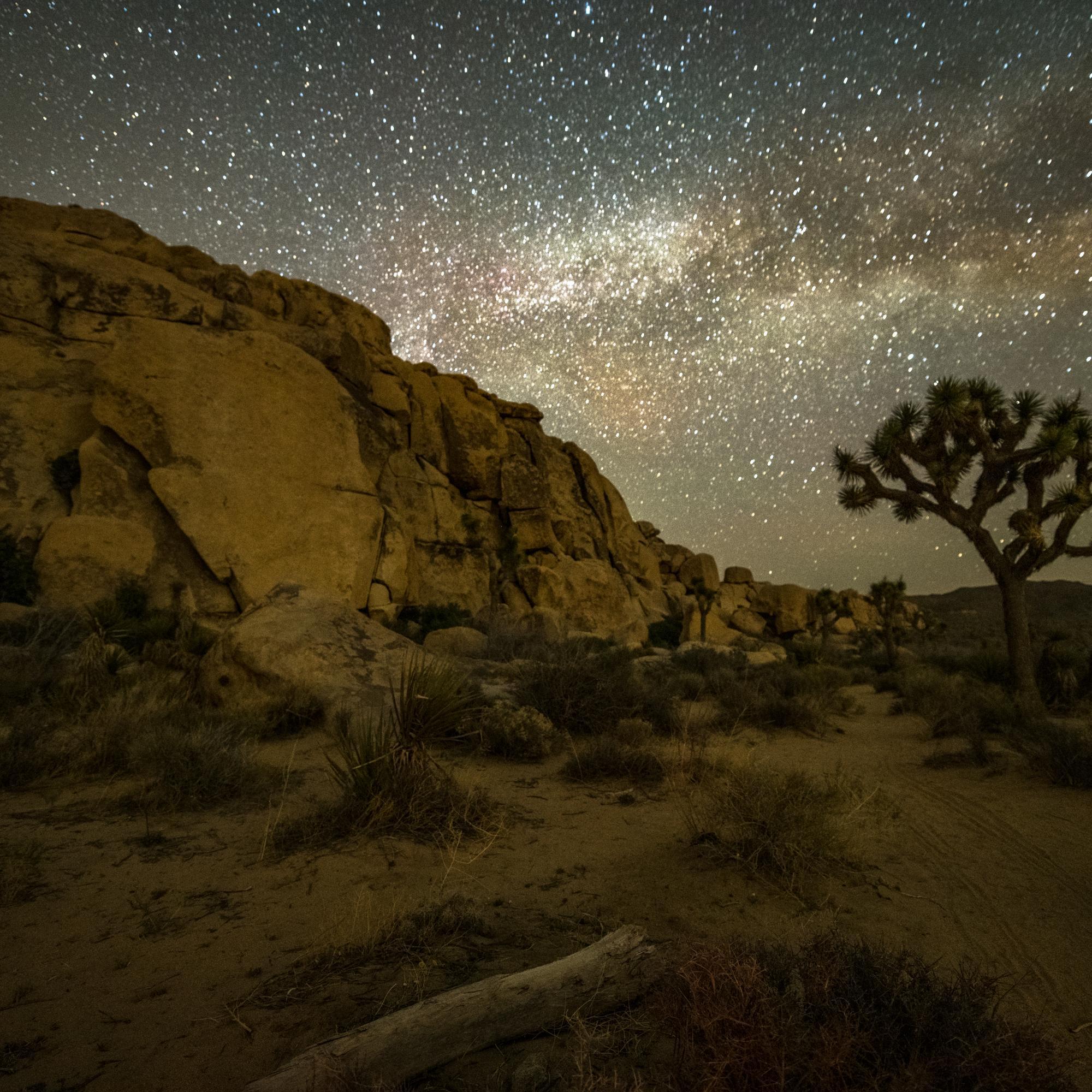 Milky Way and Joshua Tree