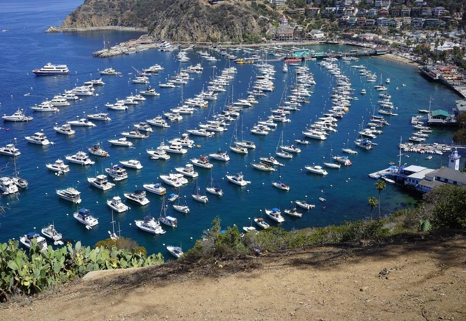 View of Catalina Bay