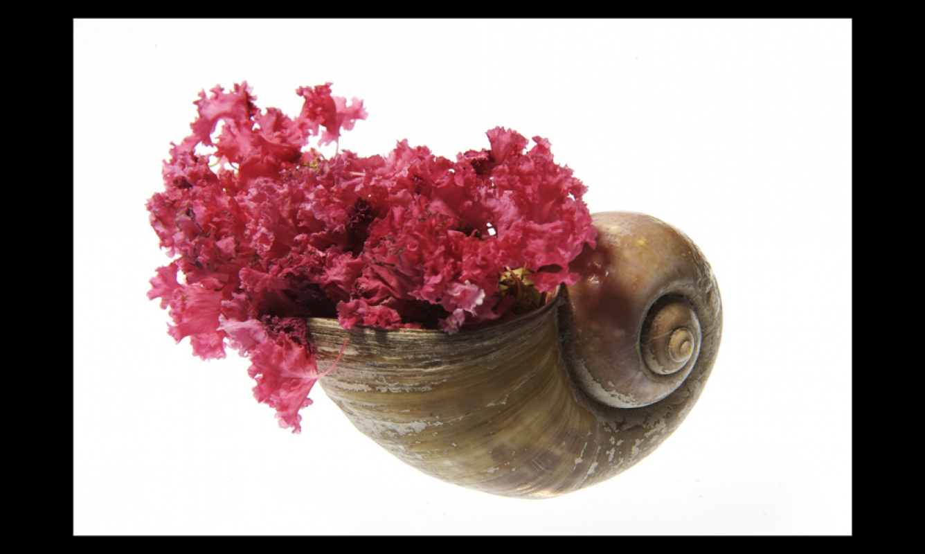Shell and flower
