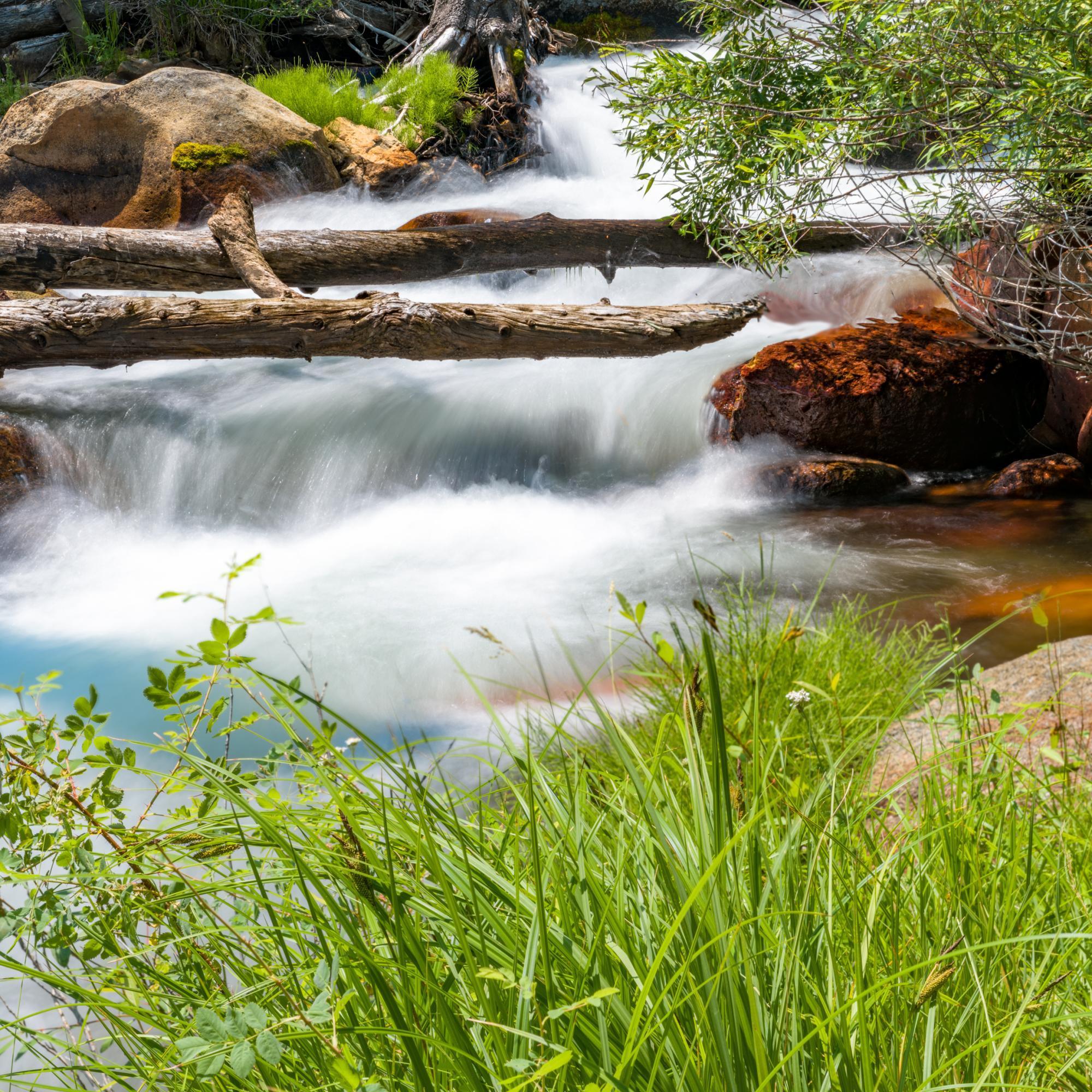 Yosemite Stream off the path