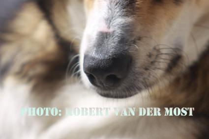 Trebor-Robert van der Most