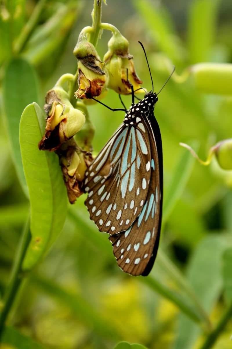 buttterfly