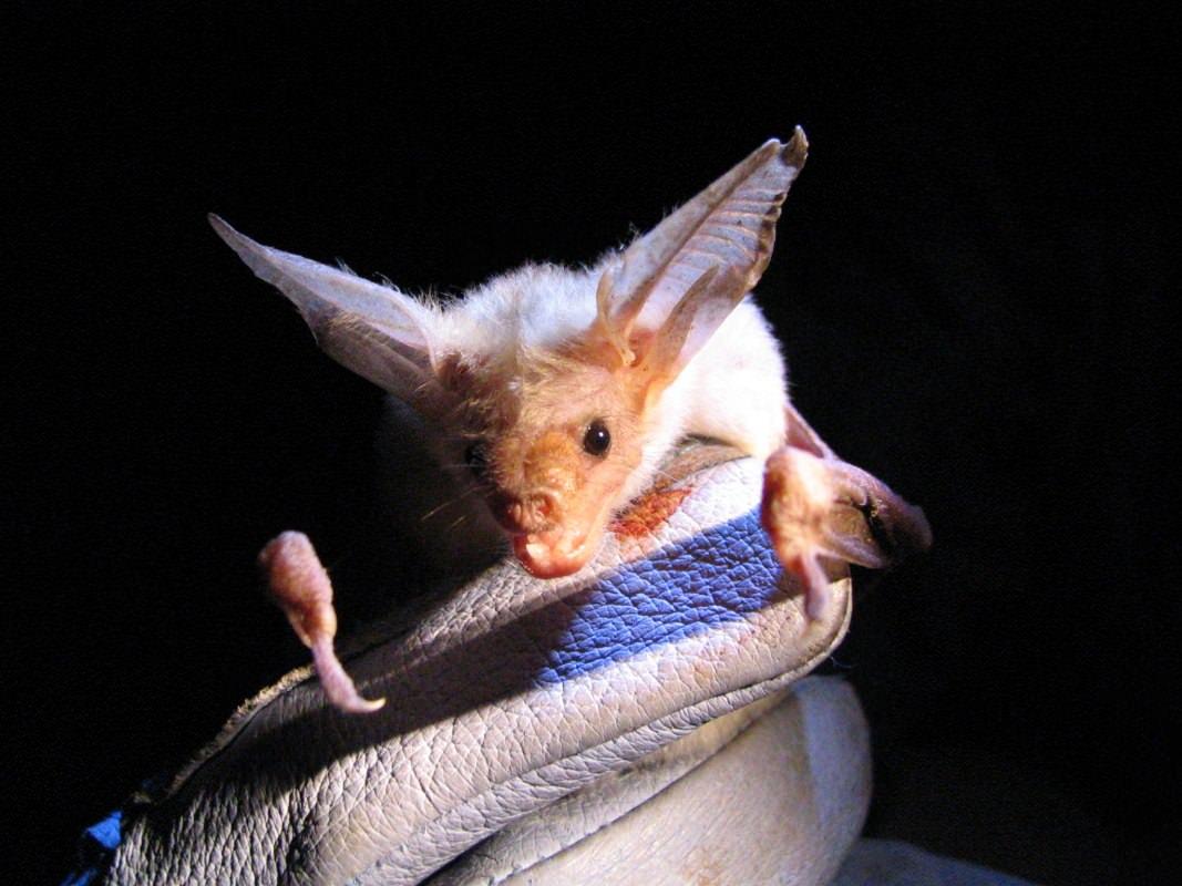 More Bats