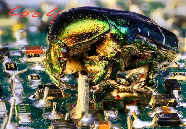käfer 2a_tonemapped1
