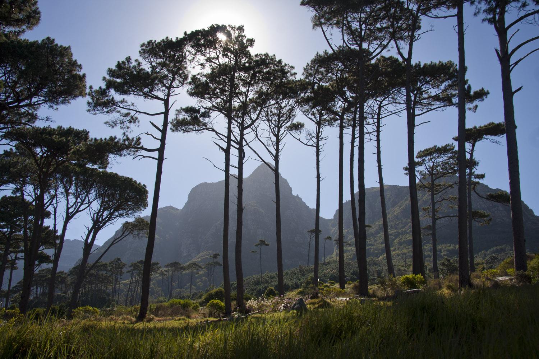 Mountain & Pines