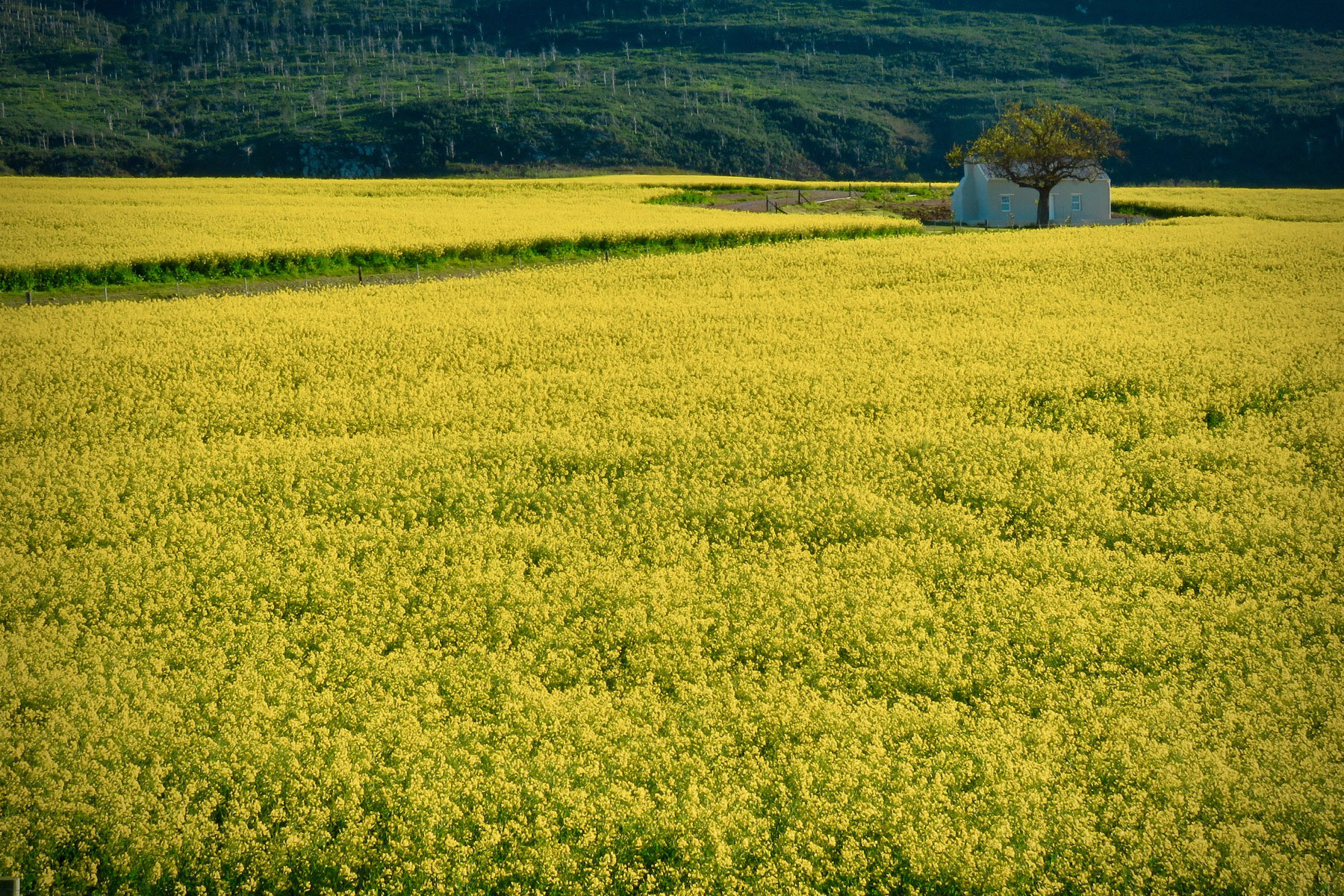 Yellow Land