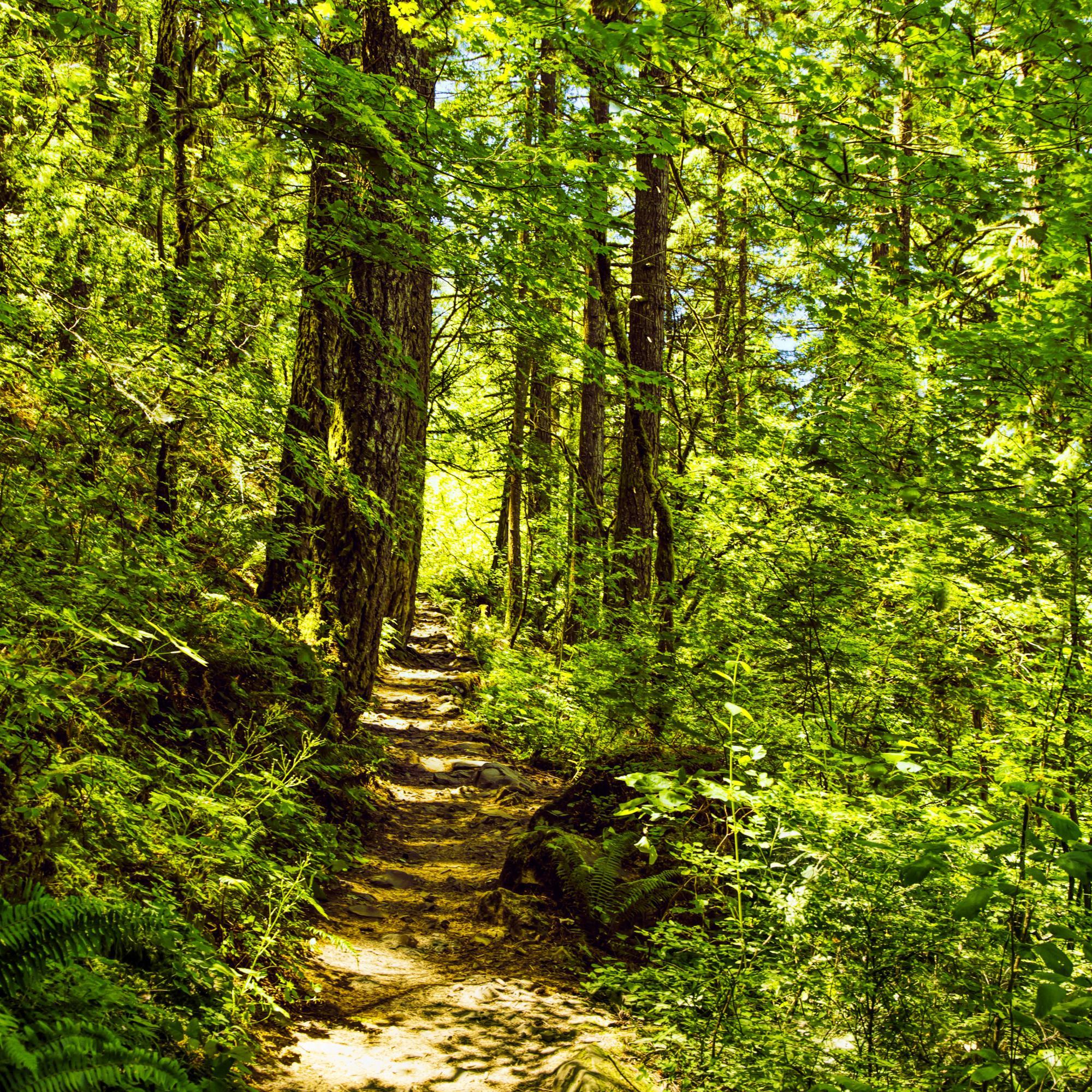 Dan Blackburn A Path in the Forest Oregon MGL0871